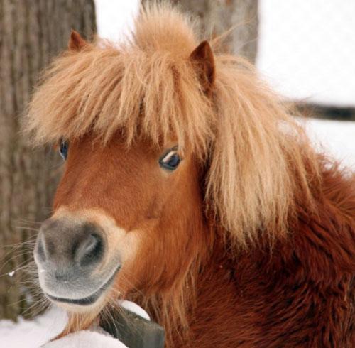 Пони очень веселые лошадки, которые любят игры