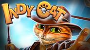 indy-cat